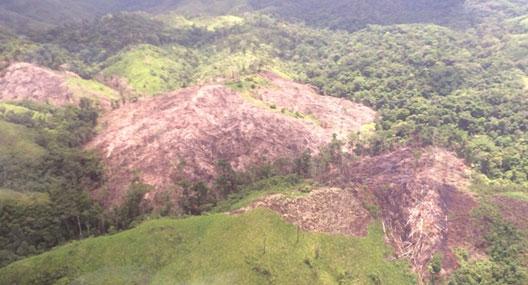 deforesta1