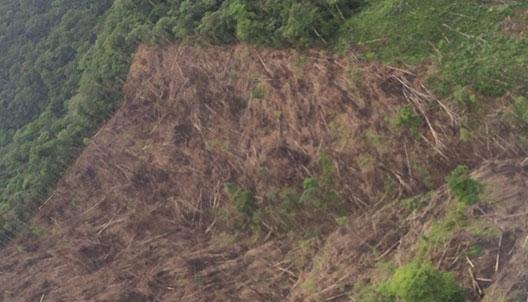 deforesta2