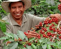cafe-ocotepeque