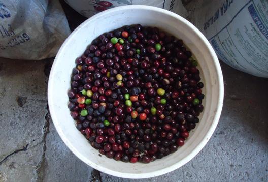 taza de cafe en grano