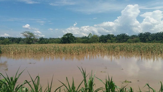 inundacion de cultivos