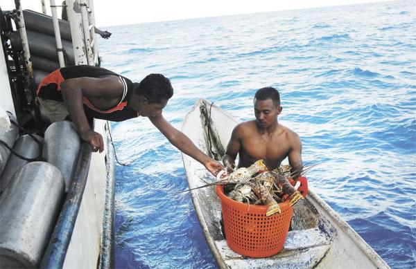 pesca langosta